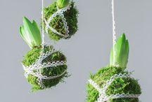 Växter o trädgård