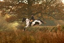 A Hunting We Will Go... / horses, hounds and art:  they stir my soul
