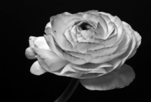 Black and White Shmorgishborg / A collection of items in black and white that inspire  / by Rachel Francis