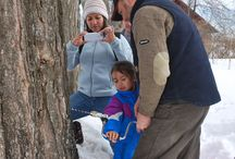 NH Maple Tour Michalak Family / Guests from Texas David, Michelle, Elizabeth and Sophia learning all about maple syrup production in NH at the Rocks Estate