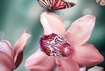 Butterflies *_*