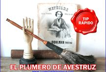 TODO ACERCA DE LOS PLUMEROS / Un artículo para la limpieza que toma fuerza en los hogares es el plumero de avestruz, aquí todo lo que debe conocer acerca de él.