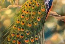 Yavus kuşu
