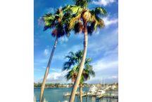 Fort Lauderdale / We love Fort Lauderdale!