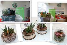 Hand-made plant collection Paganopiante. / Le handmade plant sono delle composizioni create a mano dallo staff Paganopiante, a partire dalle succulente prodotte in azienda.