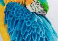 My coloured pencil art