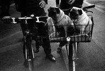 Unlimited Biking Pug Picks