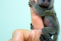 I LOVE Monkeys & Gorrillas!! / by Brandy Flores