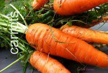 vegetable garden tips / best vegetable garden tips