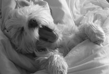 Westie Wishes / by Monica Cheuvront