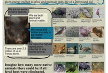 Wild Pig (Feral Hog) Infographics / Great feral hog resources for the visual learner!