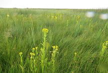 Field Work and Events for Nature Canada / by Nature Canada