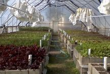 Sustainable Gardening / Sustainable gardening practices can lessen your carbon footprint and produce higher yields.