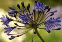 Fleurs & Plantes / conseils entretien...pour un joli jardin