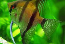 Peces / Selección de peces
