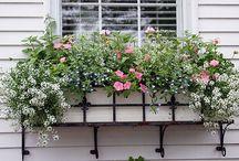 Balkonláda virágok