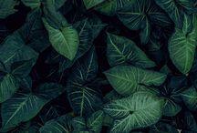 leafe it.