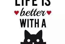 Nussi :) / Svarte katter