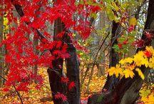 Imágenes bosques, arboles y plantas