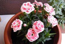 Natura? Si! / Tra fiori e piante il mio balcone é il mio giardino, sempre in divenire.
