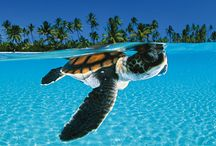 The Beauty of Scuba Diving