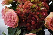 Hydrangea... / by Loralea Kirby