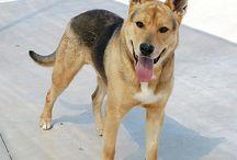 Gossos en Adopció / Gossos en Adopció al CAAD MARESME