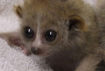 Baby animals <3 :) / adorable little beebees :)
