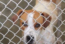 Animals ~High Kill Shelter-Needs A HOME NOW!!