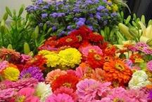flowers brighten our days