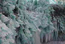 Trees / by NRDC BioGems