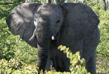 Reiseideen durch Tansania / Die ASA-Reiseveranstalter stellen hier Reisevorschläge und einige Ideen für Safaris, individuelle und geführte Rundreisen durch Tansania und die Nachbarländer vor. Haben Sie Interesse an einem bestimmten Vorschlag? Gerne können Sie uns auf www.asa-africa.com/reiseangebote kontaktieren!