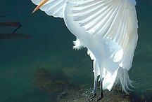 Birds beautiful & cute