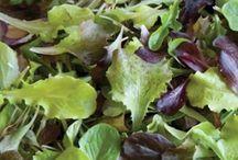 2018 Lettuce