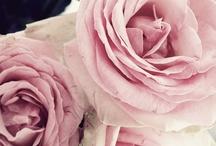 Blooms / by Steph Devlin
