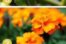 Summer/Gardening  / by Leonie DeRango