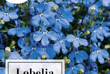 Shade Loving Plants / Annuals and Perennials great for your shade gardens!