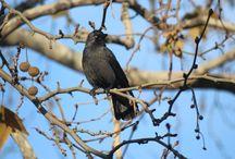 kuşlar - birds / kuşlar - birds