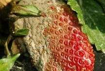 kerti növények betegségei