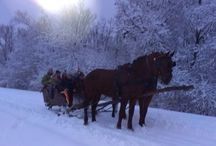 Horses - Kone