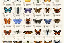 krásně motíle / Motílov jas