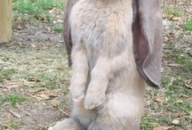 Ref_bunny
