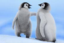 Penguins / by Sydney Vegezzi