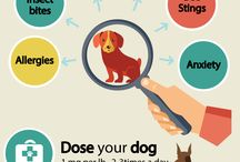 benadryl doses for dogs