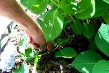 Gardening and Farming / Gardening and Farming