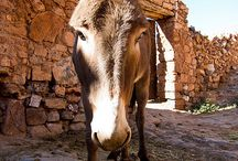 Ameln Valley Morocco / Discover the stunning Ameln Valley, Morocco