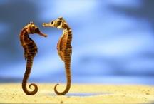 Seahorse fascination