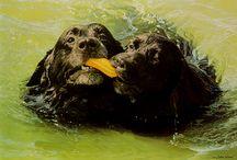 Animal paintings: John Weiss / John Weiss