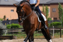 Dressage / The wonderful dressage horse and rider :-)