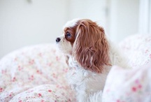 puppy love / by kelly Tyler